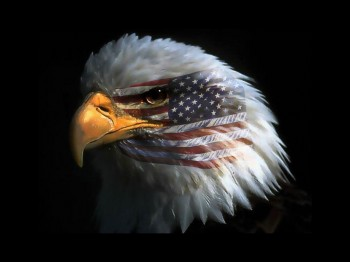 usa eagle with flag